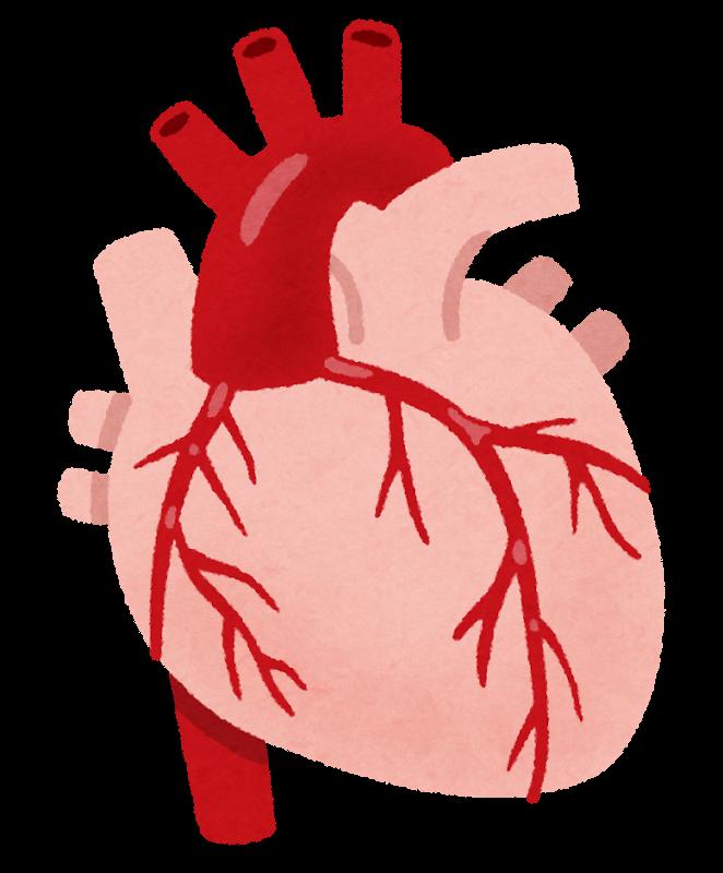 冠動脈と解剖生理-心臓を栄養する冠動脈の番号とは   看護師 ...