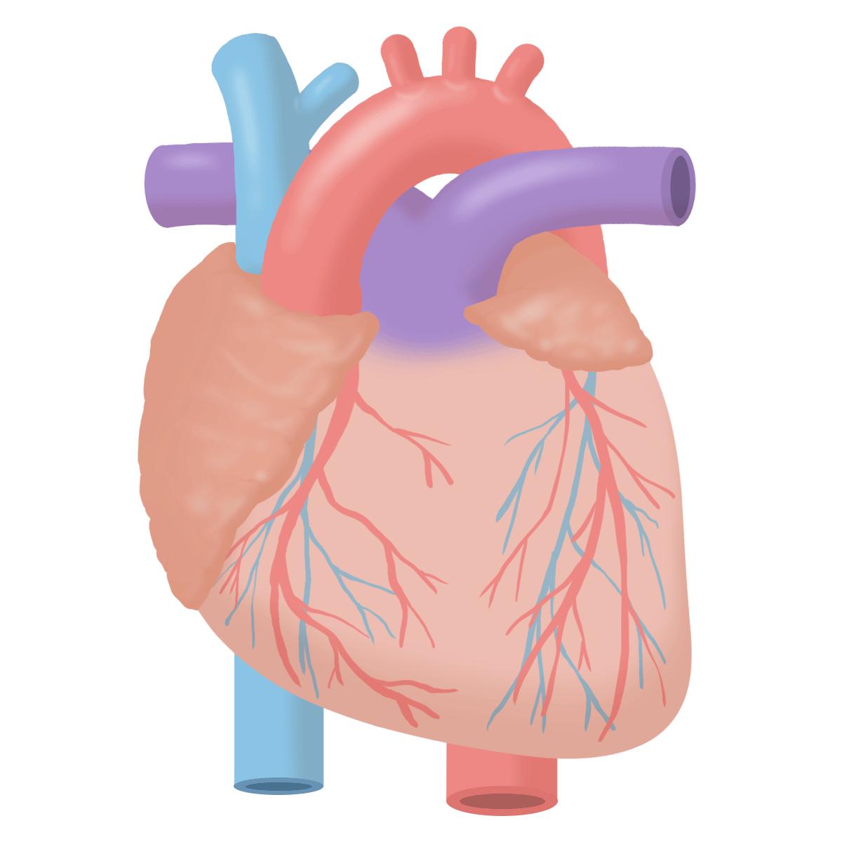 カテーテル 検査 心臓